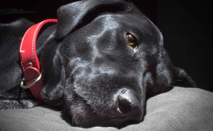 Cachorro preto, como também é conhecida a depressão